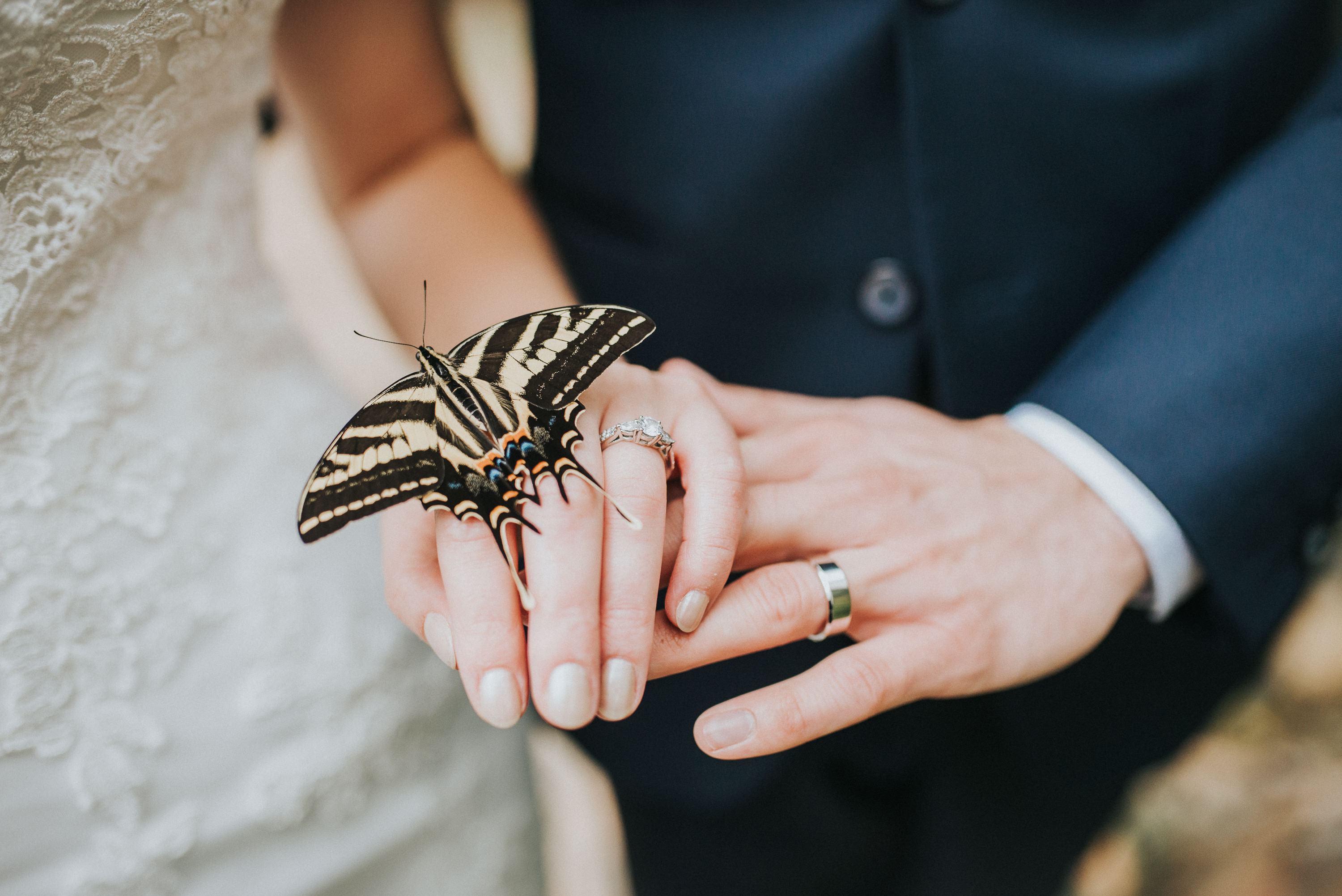 Butterfly blesses bride and groom at Devonian Botanical Gardens.